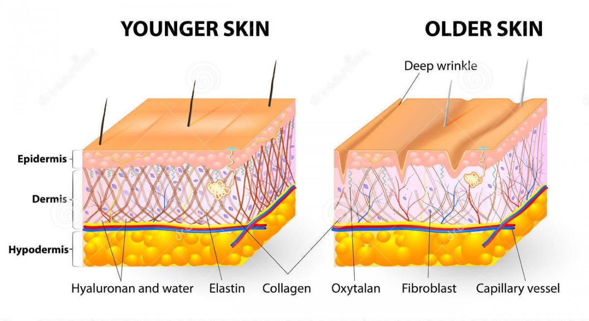 obrazuvane-na-kolagen